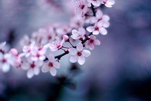primavera-04