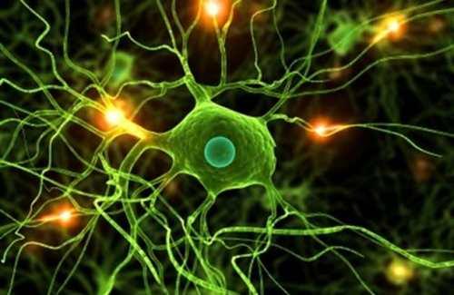 biologia-celular